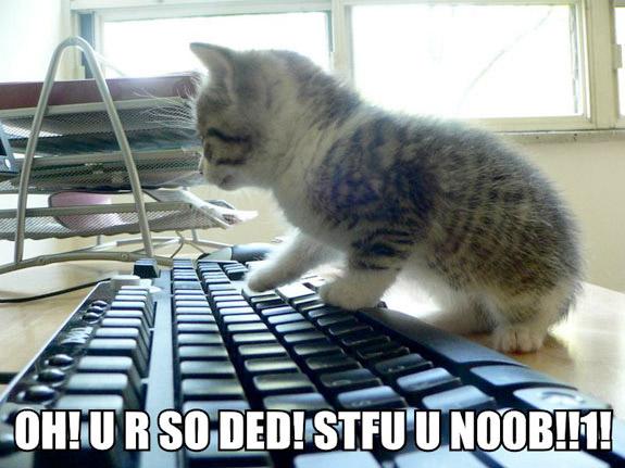 Noob kittehs!